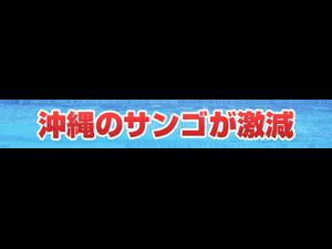 洞窟カフェ LIVE 決定 !!
