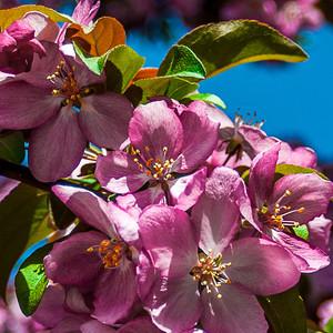 SpringFlower (5 of 6).jpg