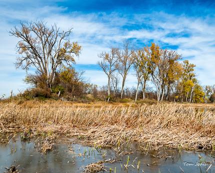 Trees  Desoto Wildlife Refuge in Nebraska