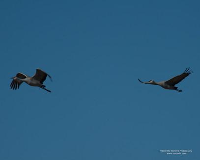 Twins in Flight