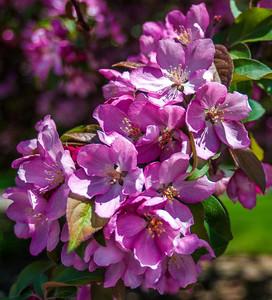 SpringFlower (1 of 6).jpg
