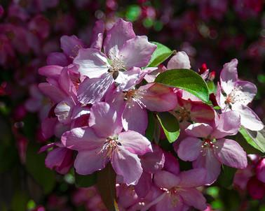 SpringFlower (4 of 6).jpg