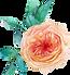 роза-14.png