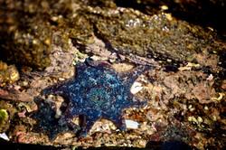 Starfish in a rockpool