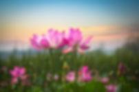 depositphotos_22296115-stock-photo-lotus