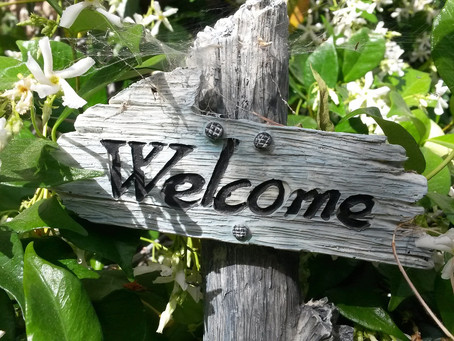 Welcome to Nature4Cities blog