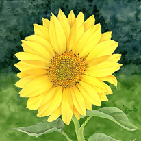 sunflower with background.png