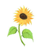 sunflower with leaves.png