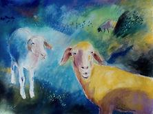Sheep II.jpg