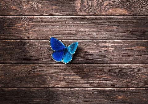 butterfly-2339711_960_720.jpg
