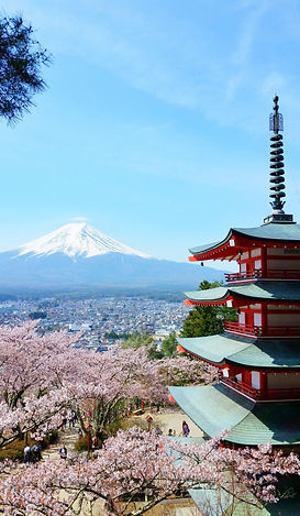 Japan cherry blossoms picture.jpg