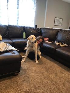Sam got a new dog