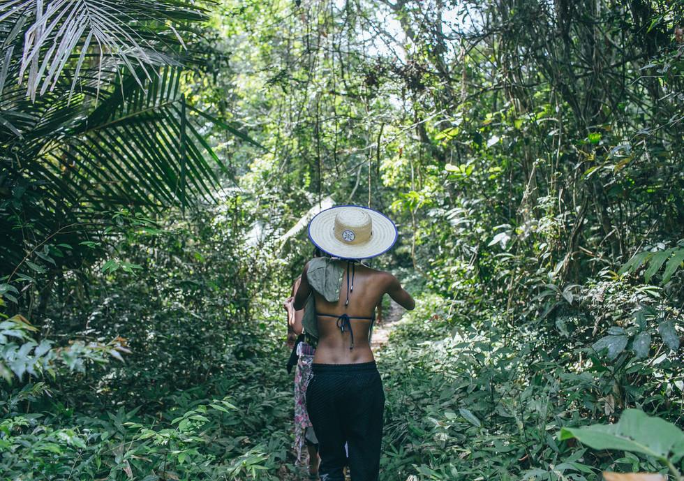 Trilhas em floresta primária.