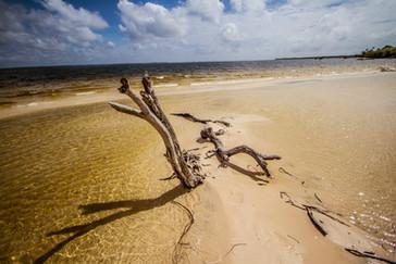 Amazonia_Amaphiko-150.jpg