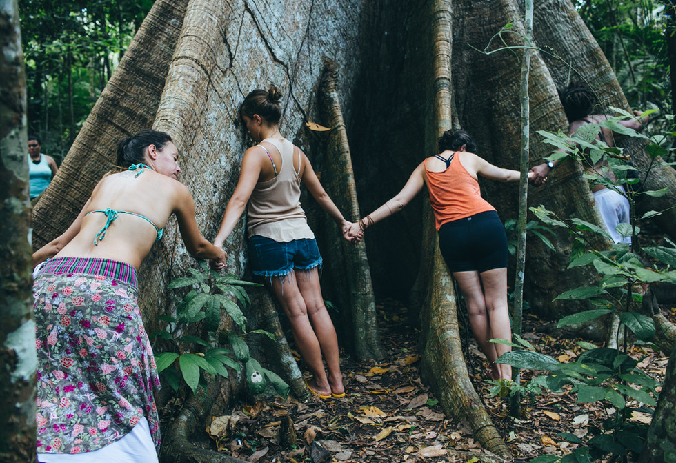 A árvore gigante, a Samaúma. Foto de Felipe Gabriel