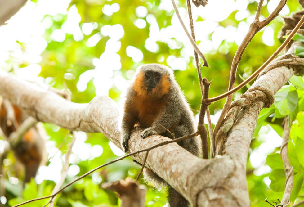Muitas espécies de macacos.