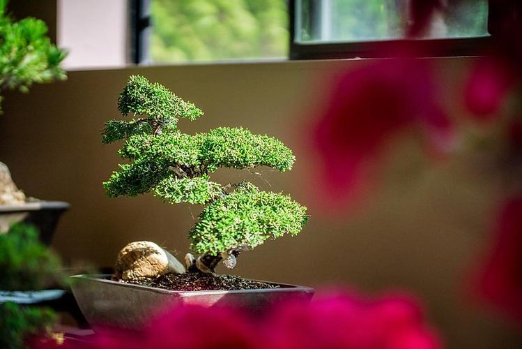 IG bonsai color.png