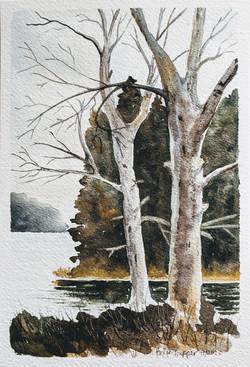 Watercolor - nature