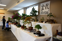 Bonsai at festival