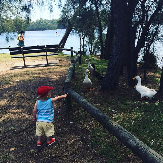Berry Reserve, Narrabeen Lakes_ Love that Summer is just around the corner