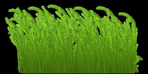 transparent-grass-clipart-10.png