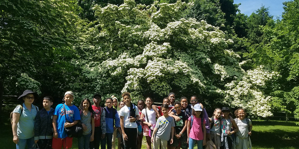 Tree Planting workshop at the Wakefield Estate and Arboretum