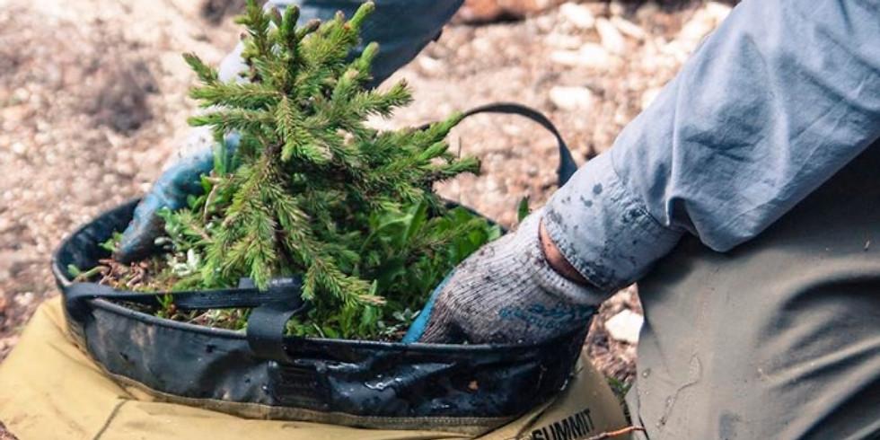 Tree Planting Webinar with REI