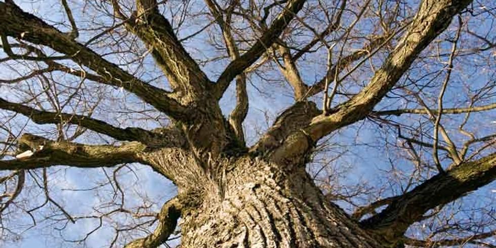 Tree Giveaway!