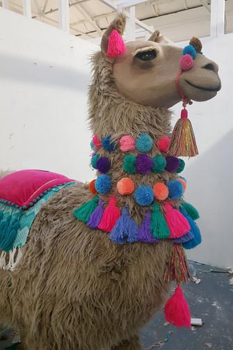 Lima the Llama