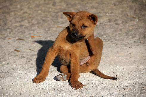 dog-1559746.jpg