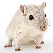 μυοκτονία, ποντίκια, αρουραίοι, νυχτερίδες, φάκες, δηλητήριο, εξόντωση, απολύμανση, παγίδες