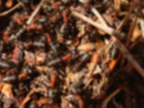ant-2236875.jpg