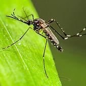 κουνούπια, ψεκασμοί, fumigation, νεφελοψεκασμός, απεντόμωση, απολύμανση, εξόντωση