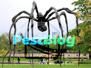 Οι αράχνες χρησιμοποιούν τα ηλεκτρικά πεδία της ατμόσφαιρας για να πετάξουν.