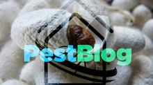 Γενετικά τροποποιημένοι μεταξοσκώληκες παραγάγουν μετάξι που «δεν υπάρχει»