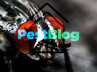 Μύγες... τελικά πόσο επικίνδυνες είναι;
