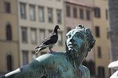 περιστέρι, περιστέρια, δεκαοχτούρες, δεκαοχτούρα, πουλιά, πτηνά, πτηνό, πουλί, ακαθαρσίες, ακίδες, απώθηση, δύχτια, ηχητικά σήματα, αεροδρόμια, μπαλκόνια, πρόβλημα, κουτσουλιές, διάβρωση
