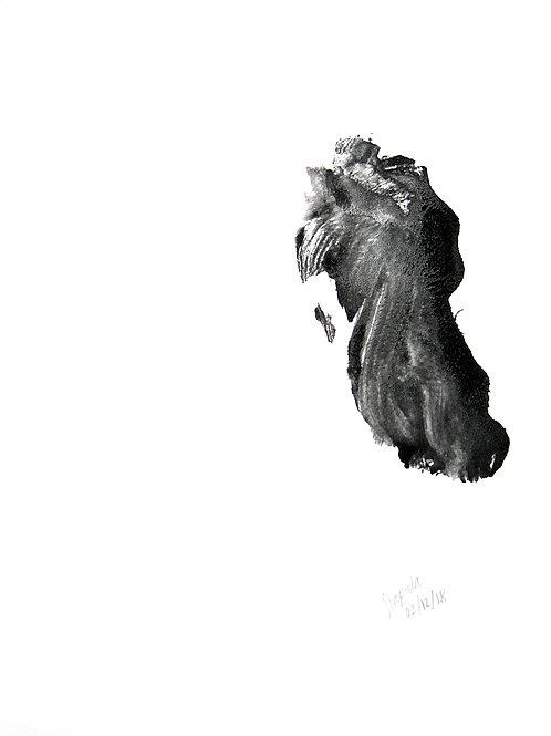 Scapula - 02/12/18