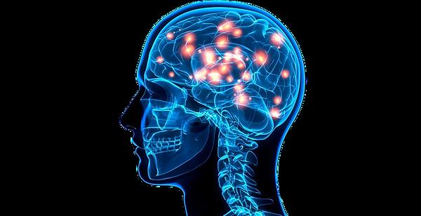 region-cerebro-humano_edited.png