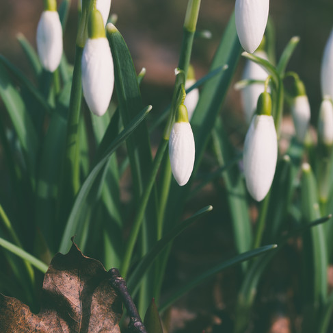 The Season of Renewal - Part 3 - Be Brilliant Everyday