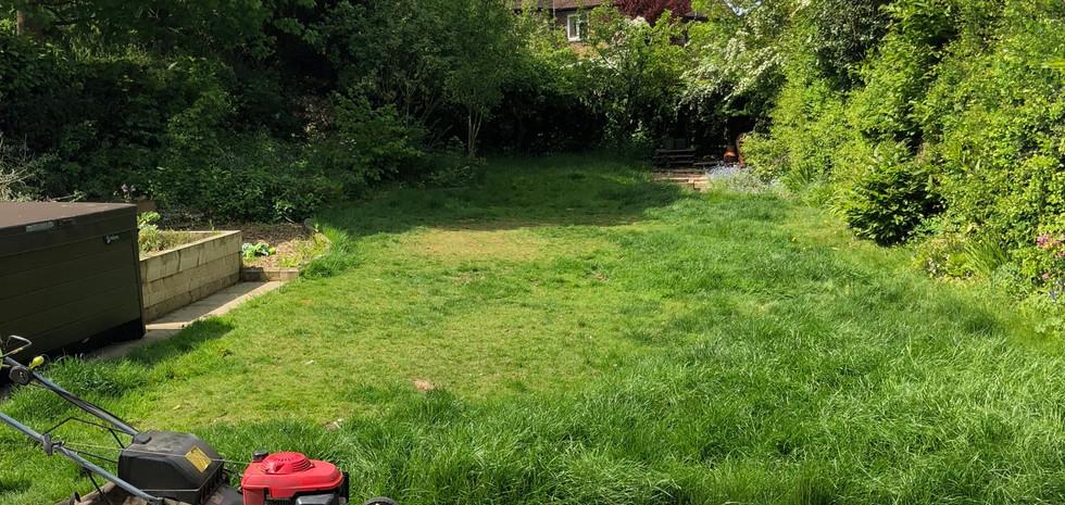 Grass becoming a jungle?