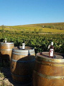 Lacerta Winery 2.jpg