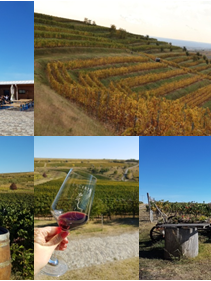 Lacerta Winery.png