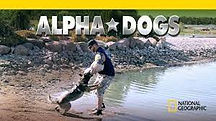 alphadogs.jpeg