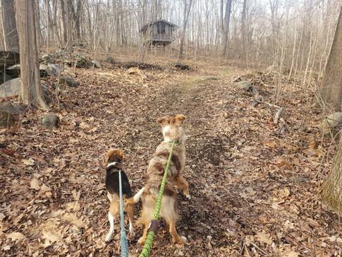 Nature walk with Luca & Zeke