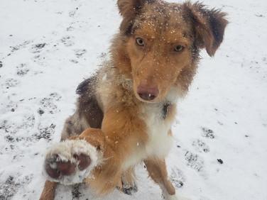 Luca wants YOU!