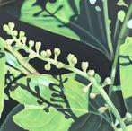 Flowering Laurel