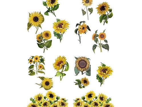 "Sunflower 24"" x 32""    PRE-ORDER"