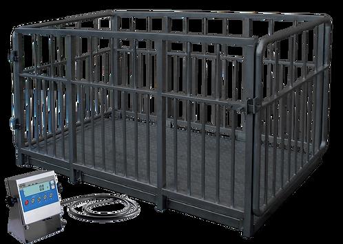 Platform Scale / Livestock scales / Radwag