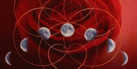 image maan en roos.jpg